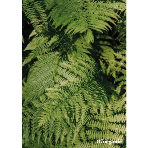 7suns poster B2 ferns